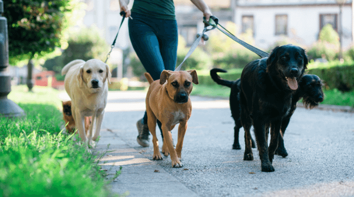 Dog Walking Business for life changing opportunities